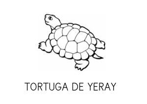 La tortuga de Yeray