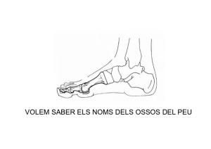 Els peus