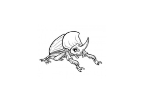 Escarabat rinoceront