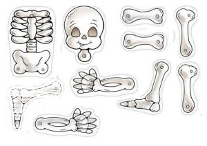 Esquelet dina3