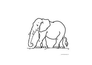Els elefants beuen aigua