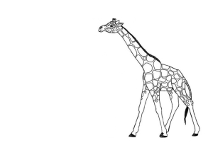 Girafa i arbre