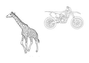 Girafa i moto