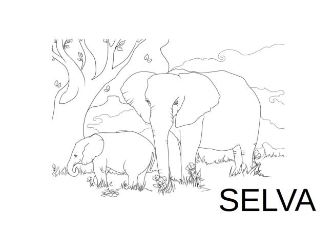 elefant-selva